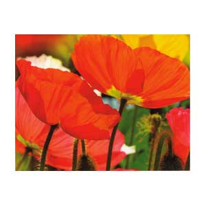 Mini Gift Card - Poppies